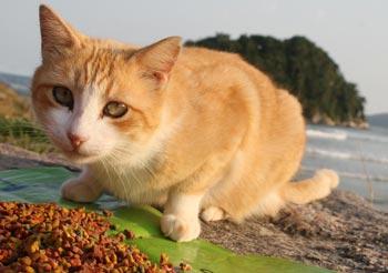 Na defesa dos Gatos…
